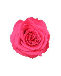 4 Premium Preserved Rose Heads Dark Pink Premium (4810)